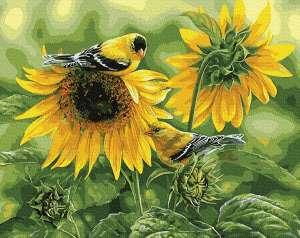 Подсолнечные птицы
