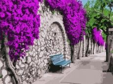 Бугенвиллея в Афинах