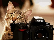 Пушистый фотограф