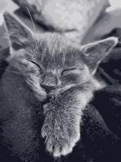 Кошачья благодарность