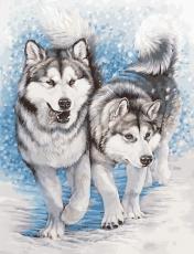 Северные собаки