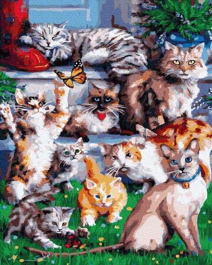 Домашние котики