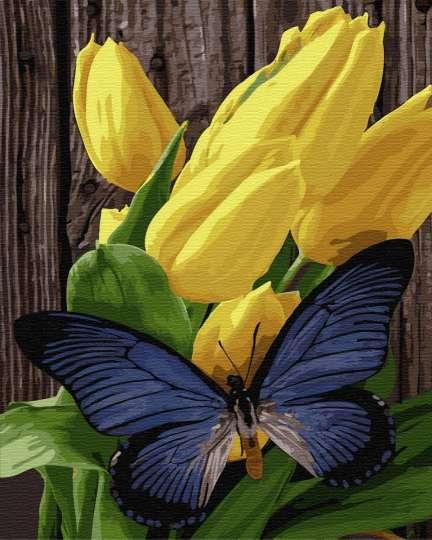 Бабочка на тюльпанах