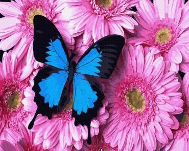 Бабочка на хризантемах