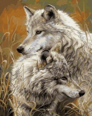 """Картина для росписи по номерам """"Волчья нежность"""" 40 х 50 см BRM8873"""